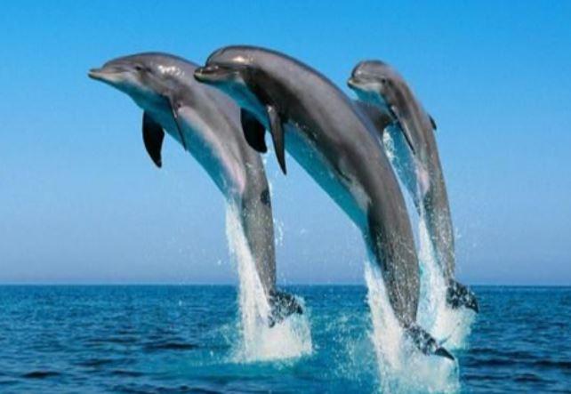 National Aquatic animal of India - राष्ट्रिय जल पशु